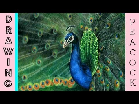 Peacock Speed Drawing: Drawing A Realistic Peacock In Coloured Pencil