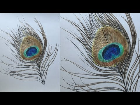 How to Draw a Peacock Feather in Color Pencils   Realistic Peacock Feather Drawing