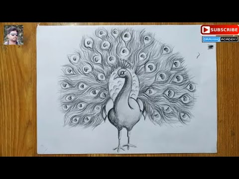 how to draw a peacock step by step in easy pencil sketch drawing for kids ,peacock drawing