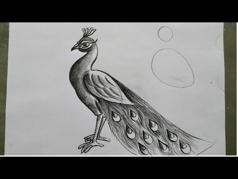how to draw a peacock step by step,easy peacock drawing for beginners,how to draw peacock by pencil