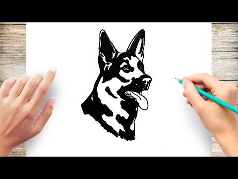 How to Draw A German Shepherd Face