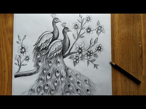 how to draw a peacock step by step,easy peacock drawing for beginners,how to draw peacock by pencil,
