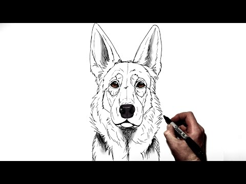 How To Draw A German Shepherd | Step By Step