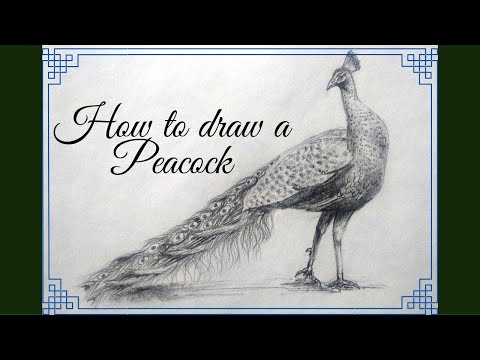 How to draw a realistic peacock step by step with pencil for beginners I मोर का चित्र