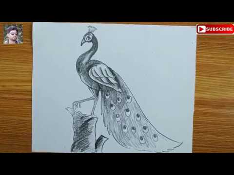 how to draw A PEACOCK STEP BY STEP,EASY PEACOCK DRAWING FOR KIDS,HOW TO DRAW A PEACOCK BY PENCIL