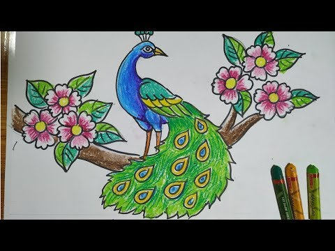how to draw a peacock step by step,easy peacock drawing for kids,how to draw a peacock by oil pastel