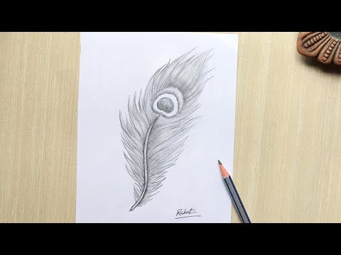 Peacock Feather Drawing Pencil Sketch