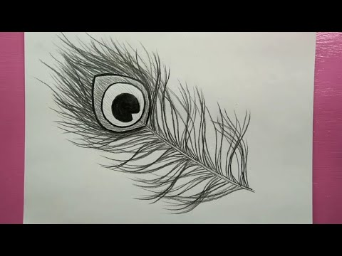 How to draw peacock feather/pencil sketch