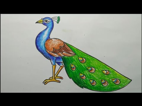 how to draw a peacock step by step,easy peacock drawing,how to draw a peacock by oil pastel color