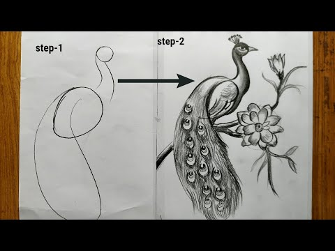 how to draw a peacock step by step,easy peacock drawing,how to draw a peacock by pencil sketch