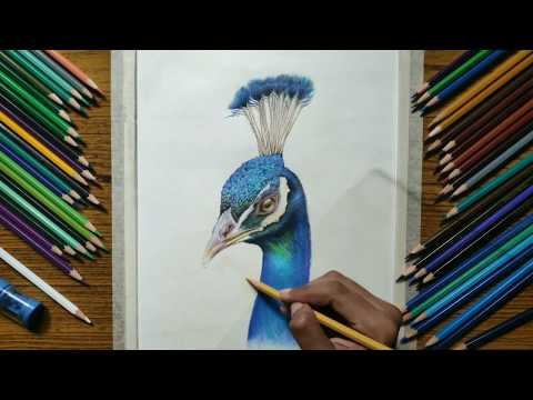 drawing realistic peacock - learn how to draw realistic drawing time lapse ( 2019 )
