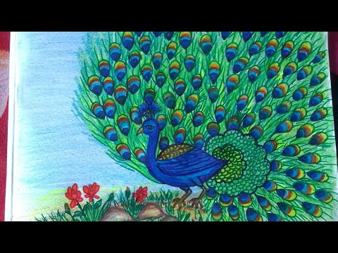 How to draw a beautiful peacock step by step