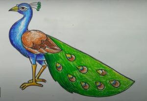Peacock drawing with color from crayons