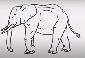 Draw an elephant easy for beginners