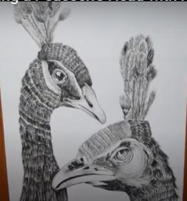 Drawn peacock heads using pencils and shading