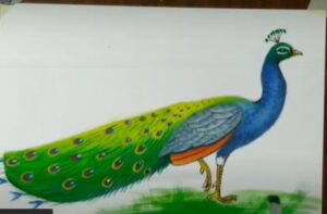 Peacock drawing with poster color