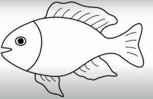 drawing an easy fish
