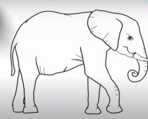 Easy Elephant Drawing Video