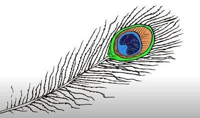 How to Draw a Peacock Feather Easy – Step by Step for Beginners