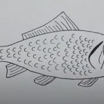 How to Draw a Fish Easy in 5 Easy Ways