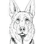How to Draw a German Shepherd Face & Head [Step-by-Step & Easy]