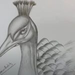 How to Draw a Peacock Head Step by Step
