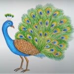 How to Draw a Peacock with Open Feathers (Step-by-Step) Easy & Realistic