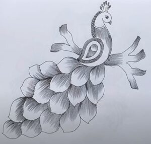 Peacock with beautiful feather designs