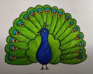 Draw male peacock with color