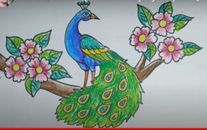 Peacock drawing in color sitting on a branch