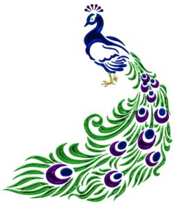 Simple peacock drawing in color with green feathers