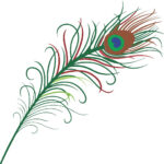 Peacock Feather Drawings - 8 Drawn Peacock Feathers & Designs