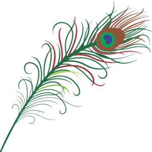 Peacock feather color drawing