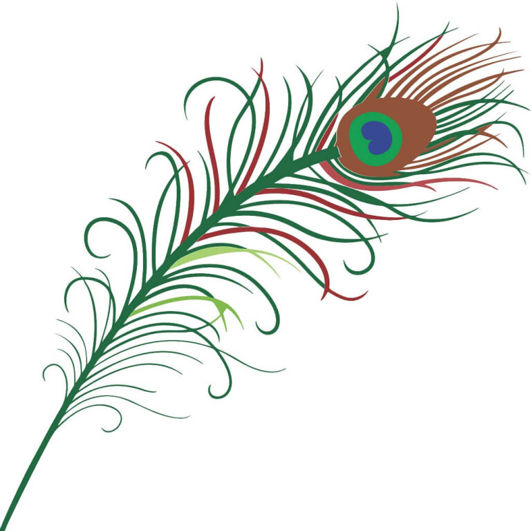 Peacock Feather Drawings – 8 Drawn Peacock Feathers & Designs