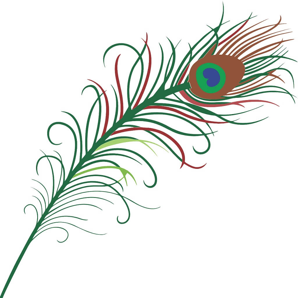 Peacock feather drawings