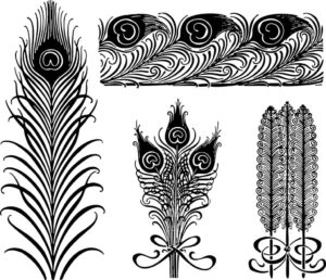 Multiple peacock feather drawing in black and white