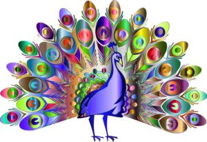 Very colorful peacock drawing