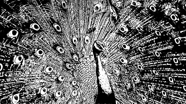 50+ Best Peacock Drawings – Realistic, Easy, Simple & Colorful
