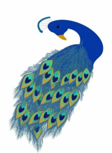 Simple colorful blue peacock drawing