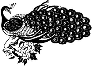 Black and white peacock drawing
