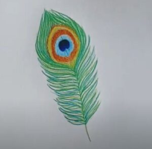 Simple peacock feather color pencils